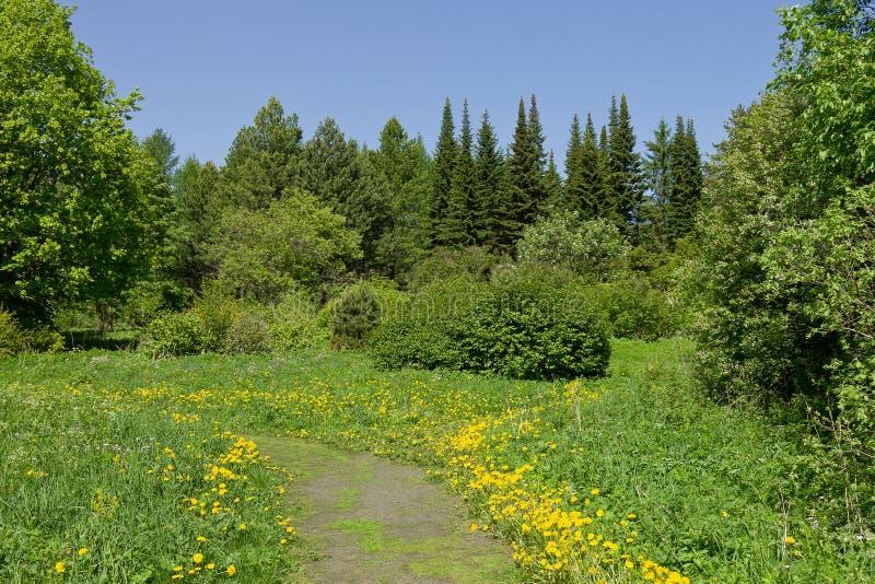 Paisagem verde bonita da floresta do verão fotos de stock