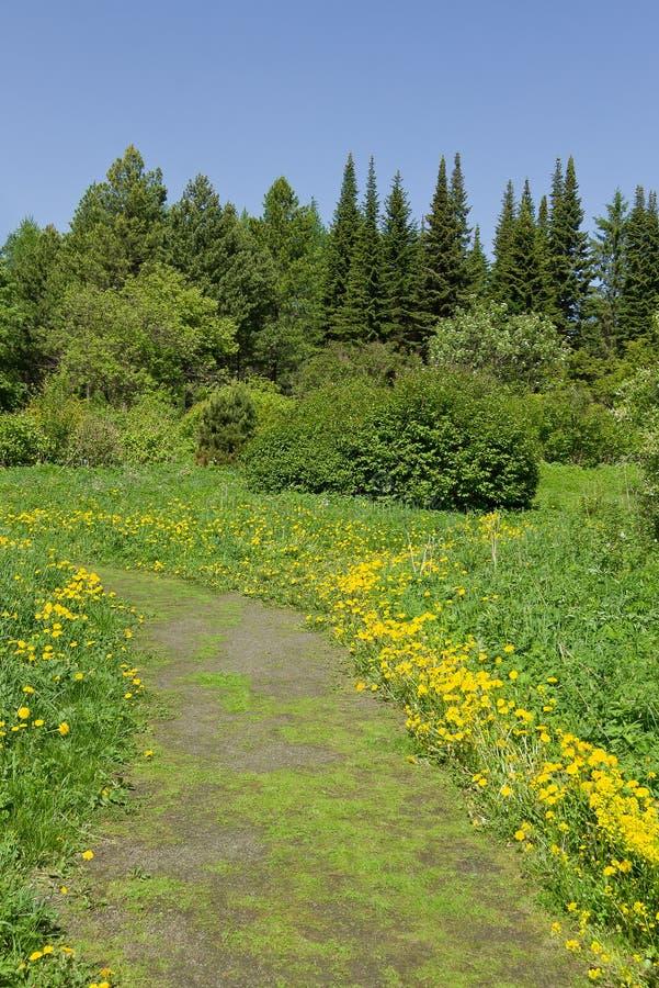 Paisagem verde bonita da floresta do verão imagem de stock