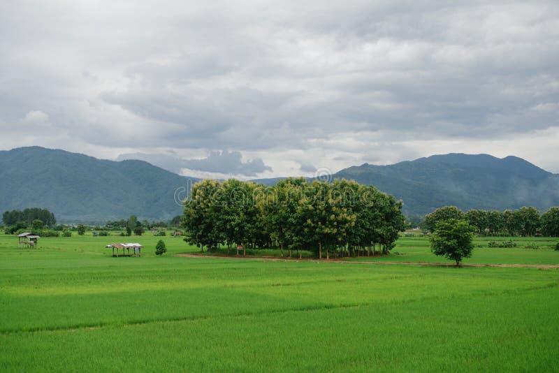 Paisagem verde bonita dos campos imagem de stock