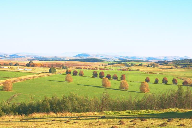 Paisagem verde da agricultura do outono com árvores fotos de stock