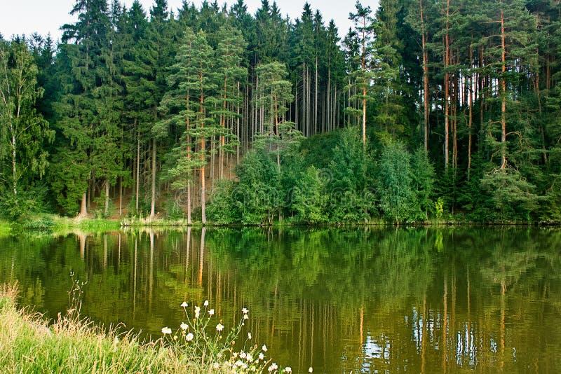 Paisagem verde da floresta e do lago Reflexão na água Superfície da água imagem de stock royalty free