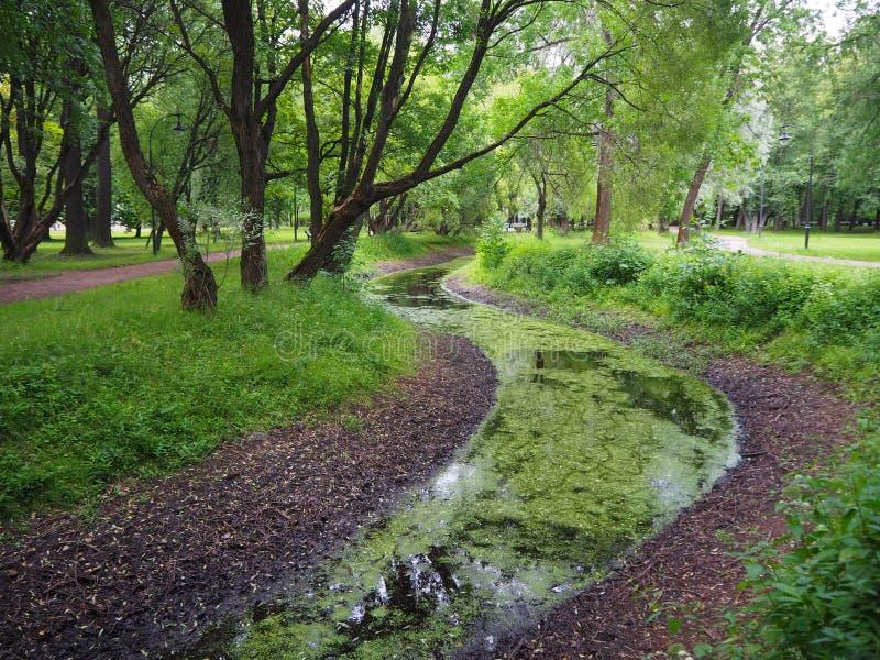 Paisagem verde da região pantanosa do pântano Opini?o da ?gua da lentilha-d'?gua do p?ntano da floresta fotos de stock royalty free