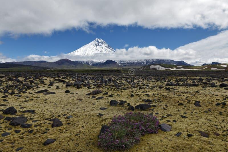 Paisagem vulcânica bonita - vista em Kamen Volcano e na tundra Rússia, Extremo Oriente, península de Kamchatka fotografia de stock royalty free