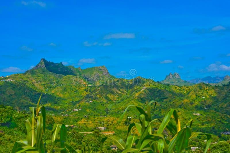 Paisagem vulcânica de Cabo Verde, planta de milho, inclinações de montanhas férteis verdes foto de stock royalty free