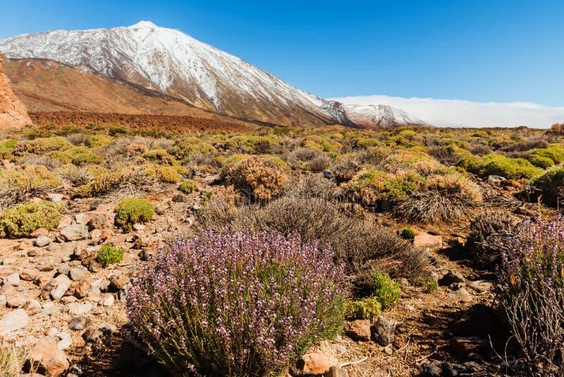 Paisagem vulcânica, Teide, Tenerife fotos de stock