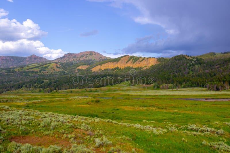 Paisagem Wyoming da pastagem no parque nacional de Yellowstone foto de stock