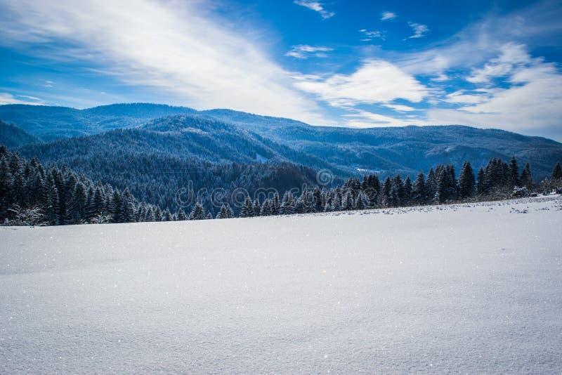Paisagens bonitas do inverno com floresta, ?rvores e sol Um inverno e um dia ensolarado na montanha C?u azul no fundo foto de stock royalty free