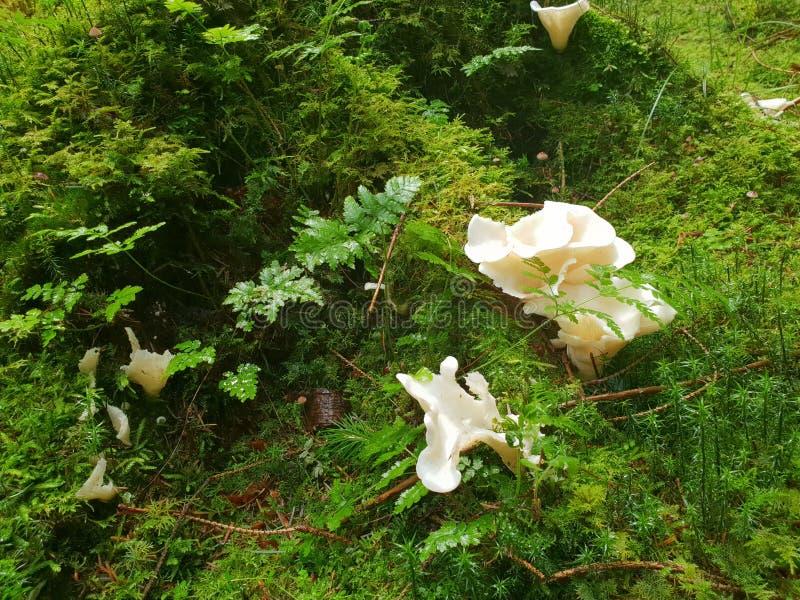 Paisagens brancas do zumbido da floresta dos cogumelos foto de stock royalty free