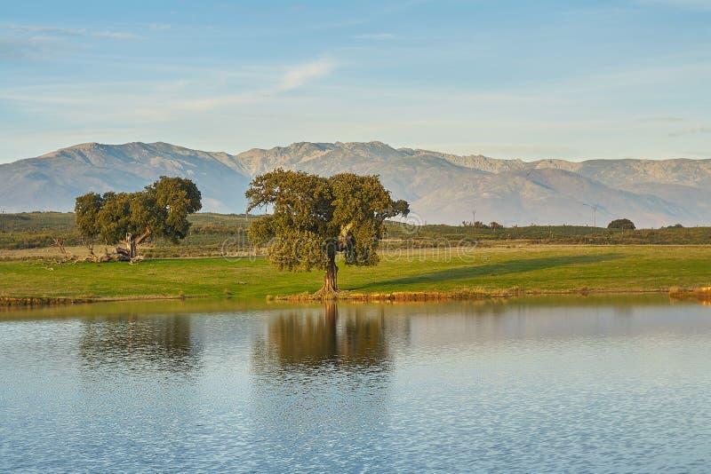 Paisagens com carvalhos, lago e montanhas imagens de stock