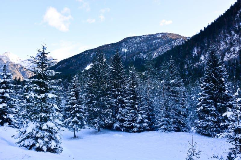 Paisagens da neve nas florestas imagens de stock royalty free