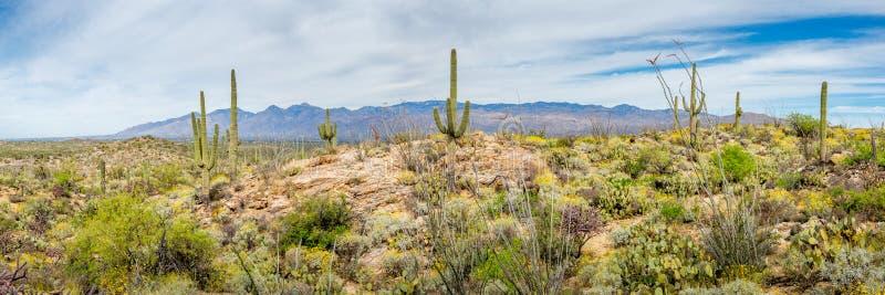 Paisagens do Arizona fotos de stock