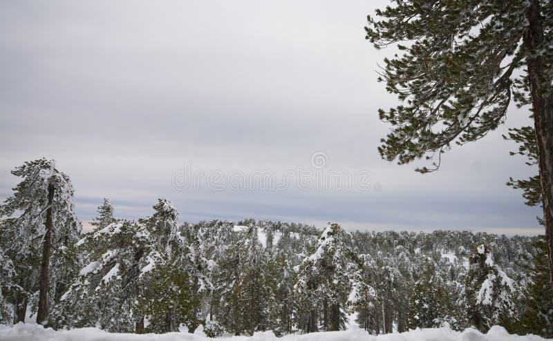 Paisagens do inverno de Chipre imagem de stock