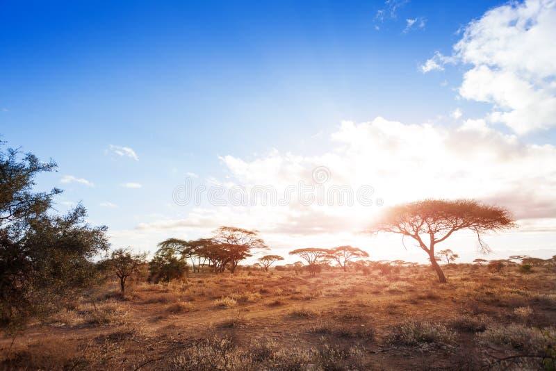 Paisagens do savana africano seco e árido imagem de stock royalty free