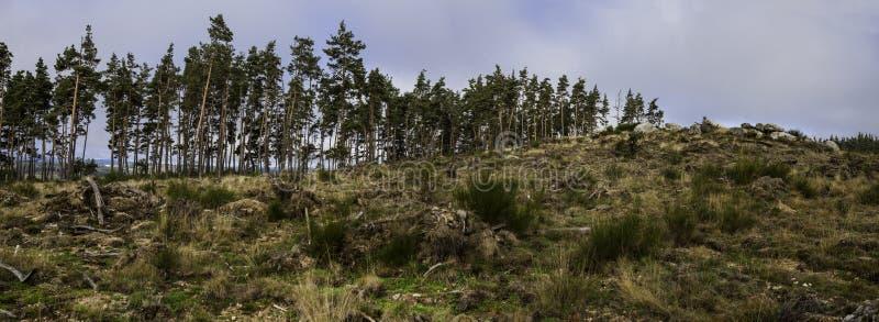 Paisaje, árbol, destruido imagenes de archivo