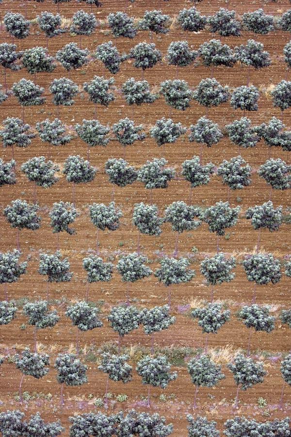 Paisaje aéreo con el campo rural foto de archivo