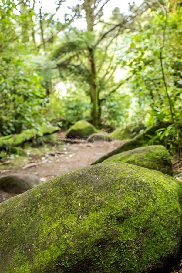 Paisaje abstracto del bosque con la trayectoria de madera del smll en una pista que camina foto de archivo libre de regalías