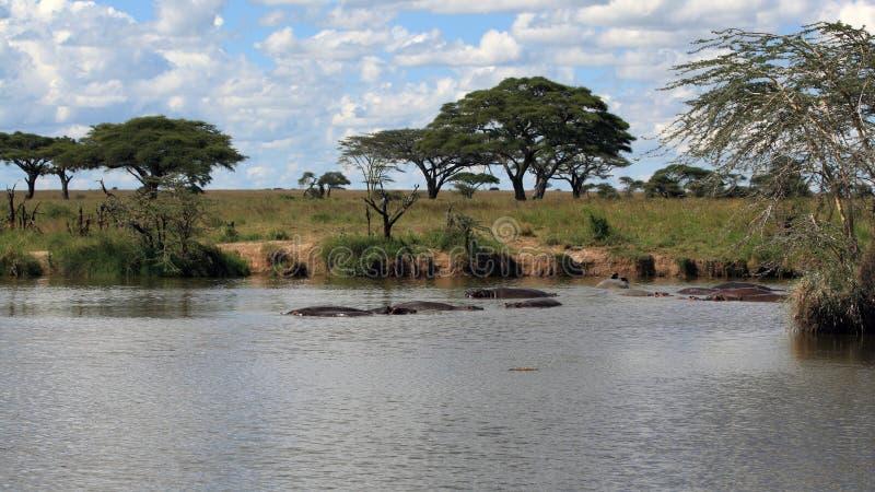 Paisaje africano con el hipopótamo fotografía de archivo