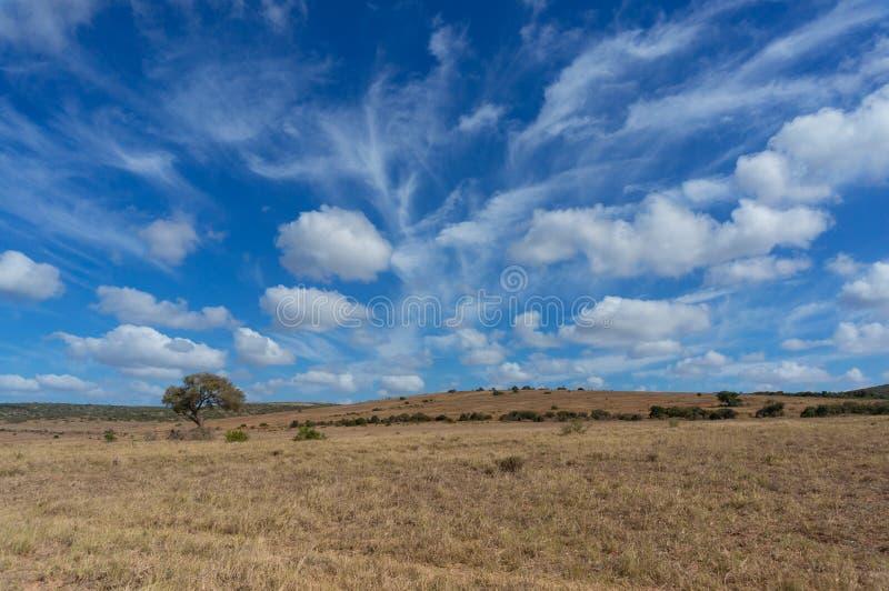 Paisaje africano espectacular de la sabana con el cielo épico imagen de archivo