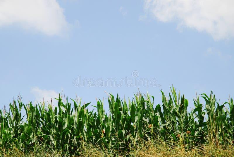 Download Paisaje agrícola foto de archivo. Imagen de resorte, verano - 7288370