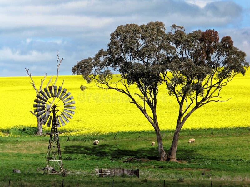 Paisaje agrícola australiano con el molino de viento del vintage imágenes de archivo libres de regalías