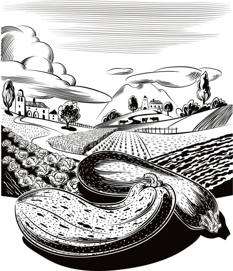 Paisaje agrícola cultivado, con las calabazas maduras ilustración del vector