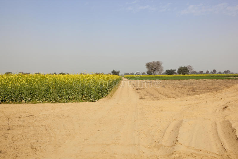Paisaje agrícola de Rajasthán foto de archivo