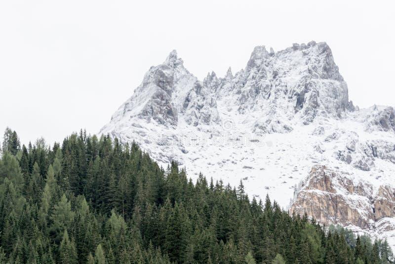 Paisaje alpino con el bosque verde del pino y las montañas nevosas imagenes de archivo