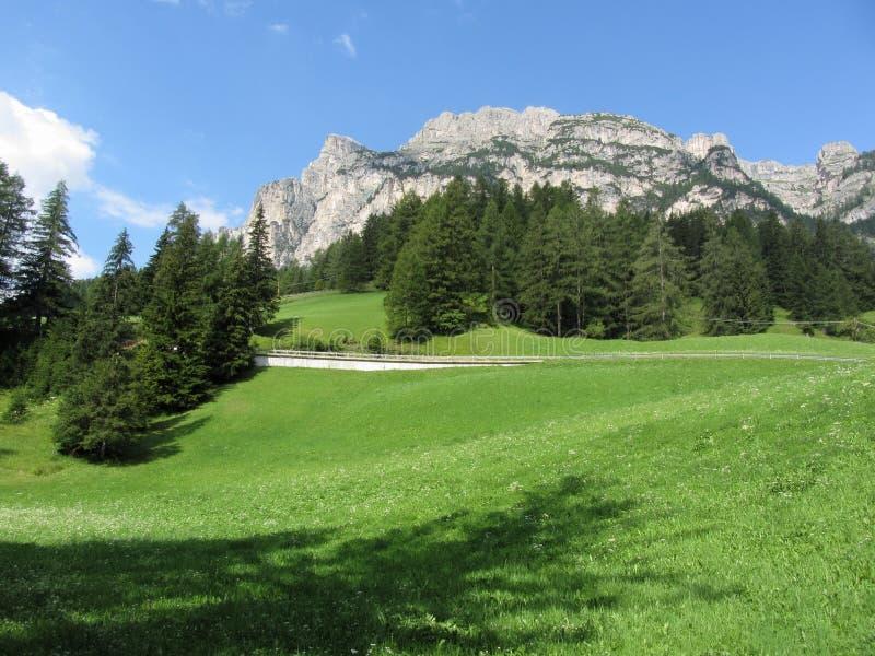 Paisaje alpino con los pastos y los abetos verdes contra las dolomías italianas en el verano Visión desde el pueblo del chalet de imagenes de archivo
