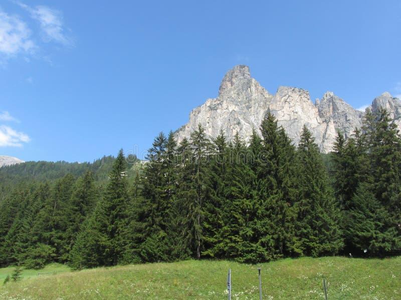 Paisaje alpino con los pastos y los abetos verdes contra las dolomías italianas en el verano Visión desde el pueblo del chalet de fotografía de archivo