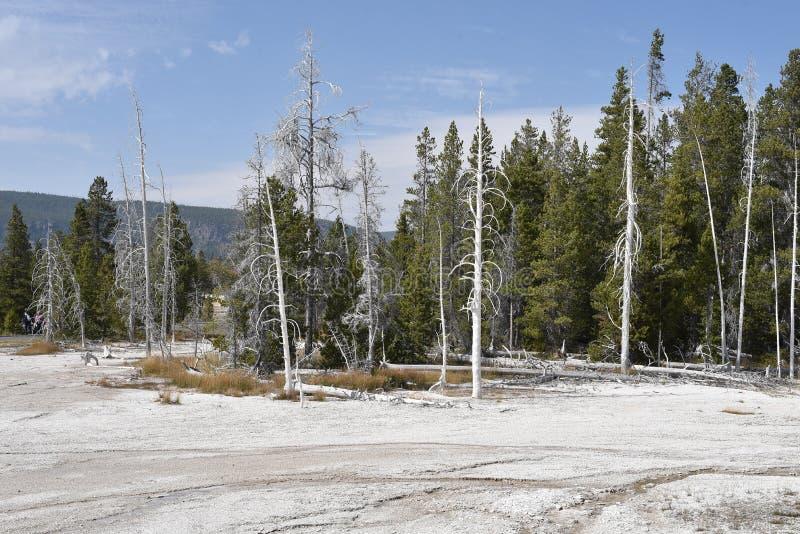 Paisaje apocal?ptico La maravilla natural de Yellowstone imagenes de archivo