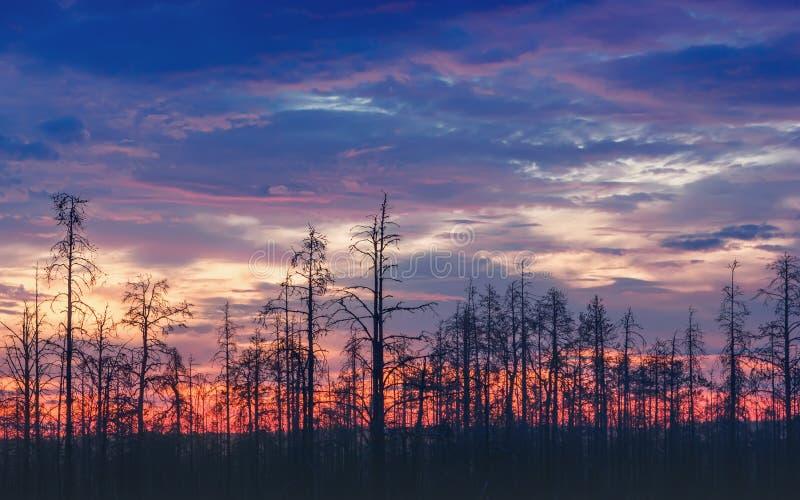 Paisaje atmosférico de la noche con Deadwood en la puesta del sol imagen de archivo libre de regalías