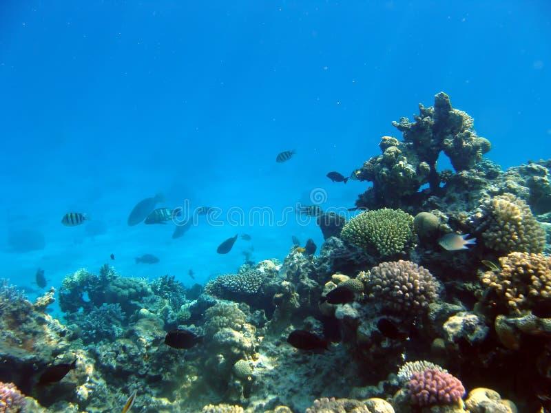 Paisaje bajo el agua fotos de archivo