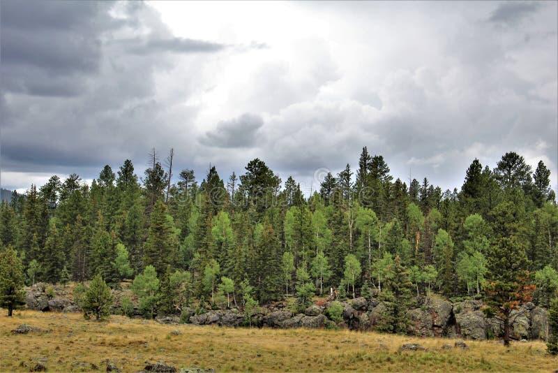 Paisaje blanco de la reserva de Apache de las montañas, Arizona, Estados Unidos imagen de archivo libre de regalías