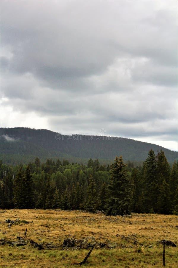 Paisaje blanco de la reserva de Apache de las montañas, Arizona, Estados Unidos imagen de archivo