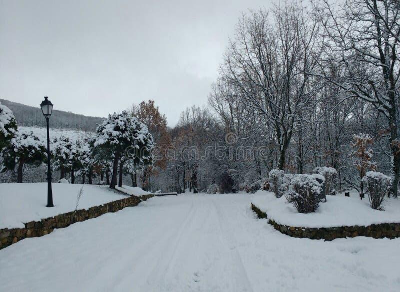 Paisaje blanco increíble del invierno imágenes de archivo libres de regalías