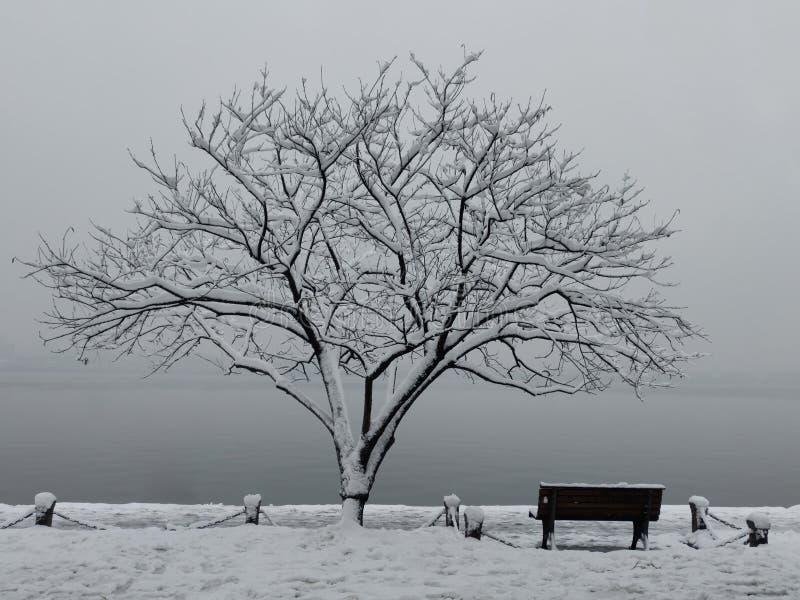 Paisaje blanco y negro de la nieve con el árbol y el banco imagen de archivo