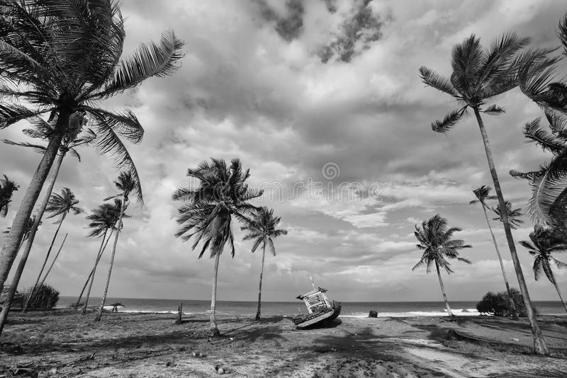 Paisaje blanco y negro del pueblo del pescador con el árbol de coco, imagen de archivo libre de regalías
