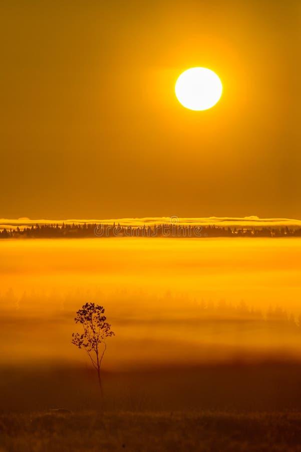 Paisaje brumoso de la salida del sol imagen de archivo