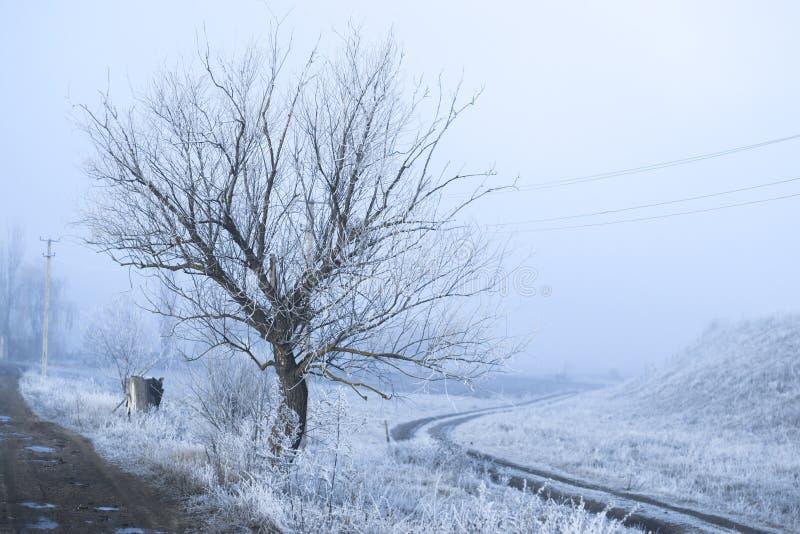 Paisaje brumoso escarchado de la mañana en el pueblo foto de archivo