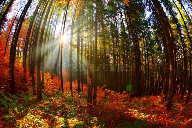Paisaje caliente del otoño en el bosque imagen de archivo