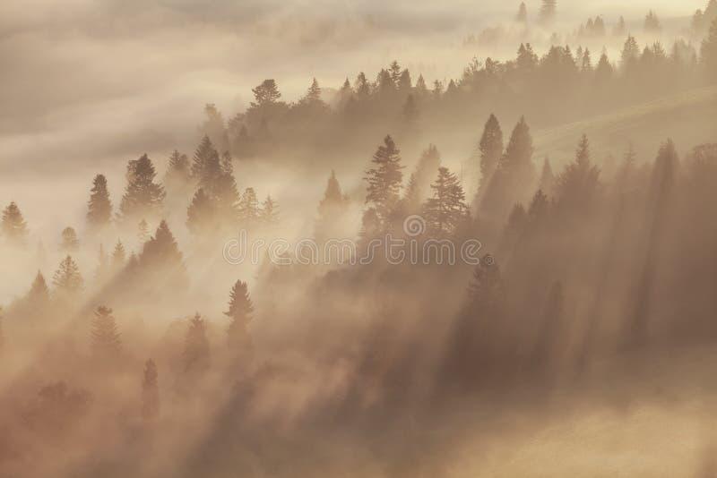 Paisaje caliente del otoño en un bosque, con el sol echando rayos de la luz hermosos a través de la niebla y de los árboles Visió imágenes de archivo libres de regalías