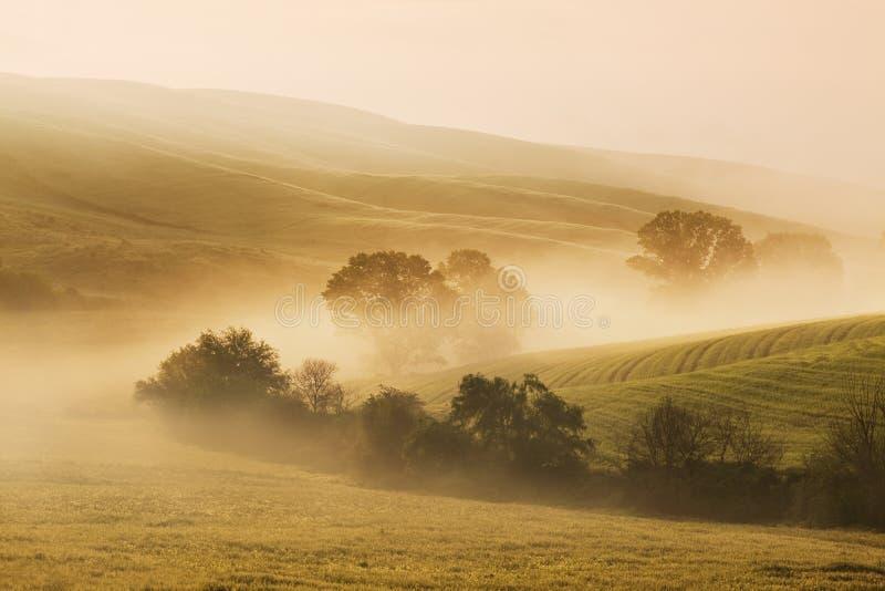 Paisaje caliente del otoño o del verano en un bosque con el sol que echa rayos de la luz hermosos a través de la niebla y de los  fotografía de archivo
