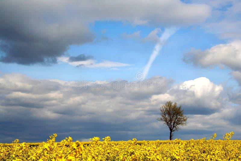 Paisaje - campo amarillo fotografía de archivo