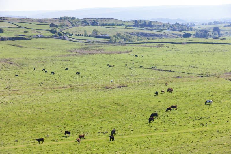 paisaje cerca de Hadrian& x27; pared de s, Northumberland, Inglaterra imagen de archivo libre de regalías