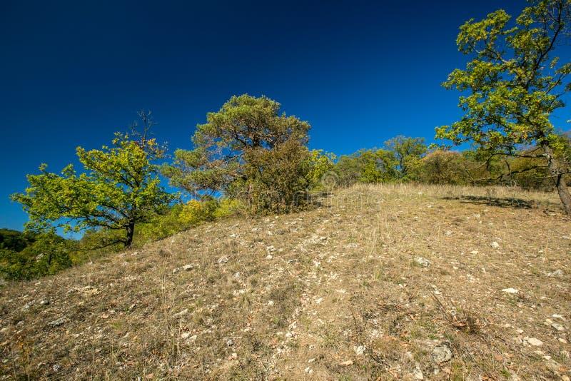 Paisaje chamuscado del otoño, cielo azul fotografía de archivo