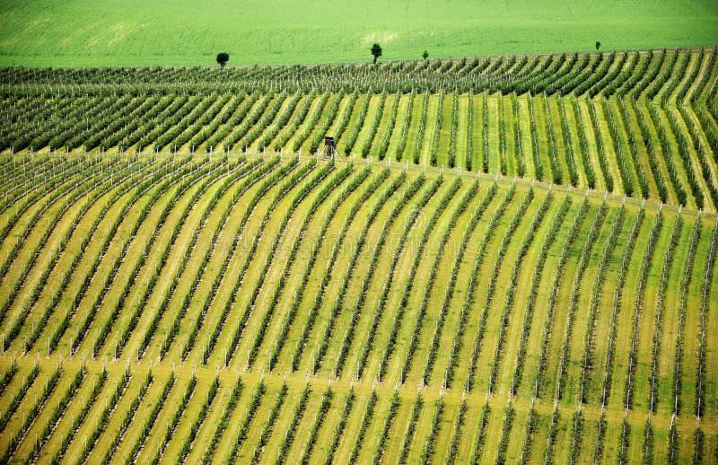 Paisaje checo del viñedo debajo del castillo de Hazmburk foto de archivo libre de regalías