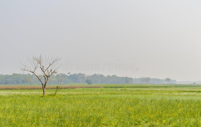 Paisaje colorido de la primavera con la violación amarilla: Esto es una fotografía del campo de flor hermoso de la rabina captura foto de archivo libre de regalías