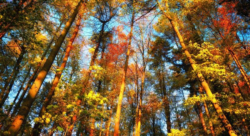 Paisaje colorido del bosque del otoño fotos de archivo libres de regalías