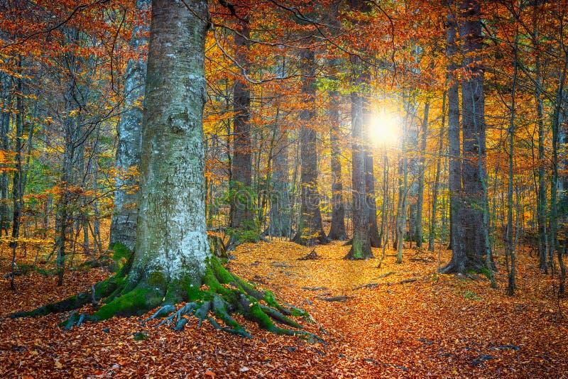 Paisaje colorido del bosque del otoño espectacular fotografía de archivo