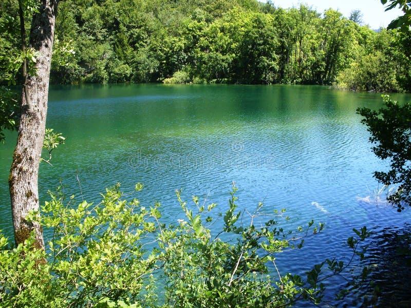 Paisaje colorido y vibrante de la orilla del lago Paisaje tranquilo útil como fondo Baje el barranco de los lagos Lagos Plitvice  fotografía de archivo libre de regalías
